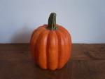 かぼちゃ M